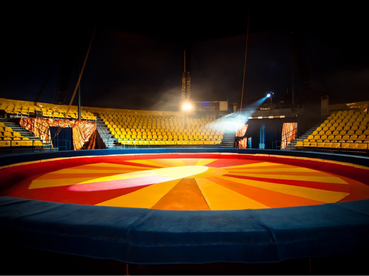 The situation of circus in the EU Member States